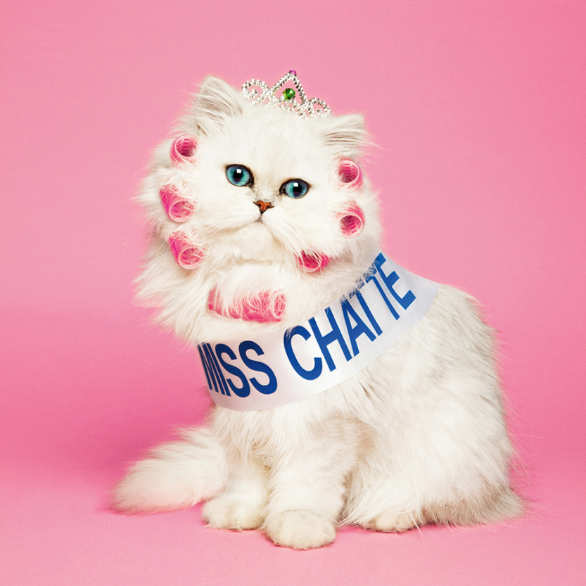 miss chatte